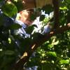 83歳木に登る。
