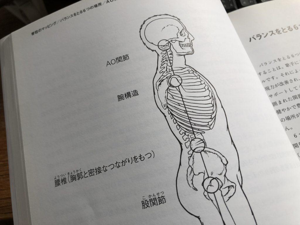 人体骨格を横から見た図